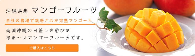 沖縄県産 マンゴーフルーツ